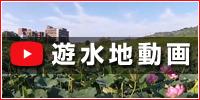 麻機遊水地の営み from youtube